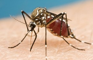Photo courtesy of npr.org Three cases of the Zika virus have been reported in Illinois.